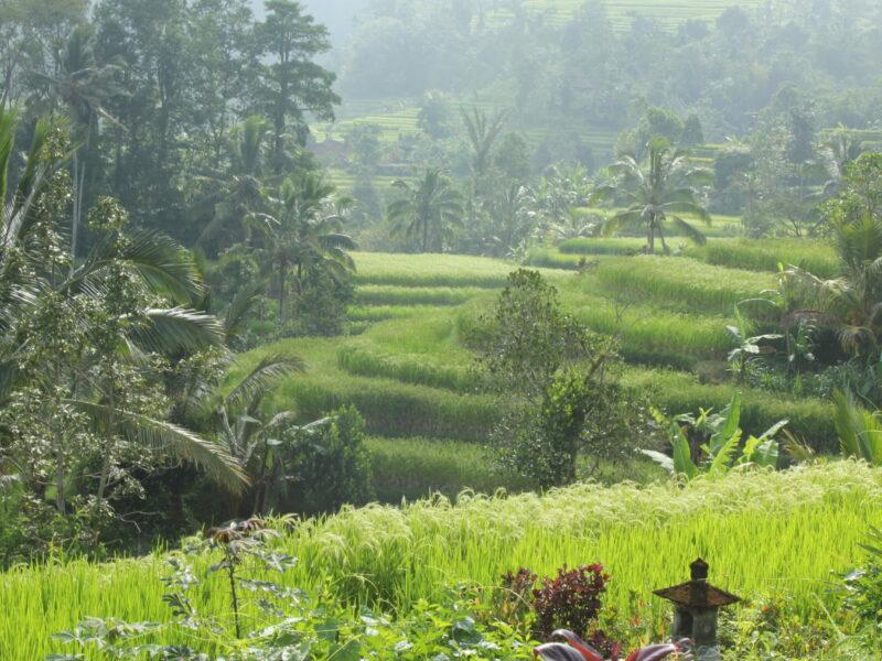 Bali-Rice-fields